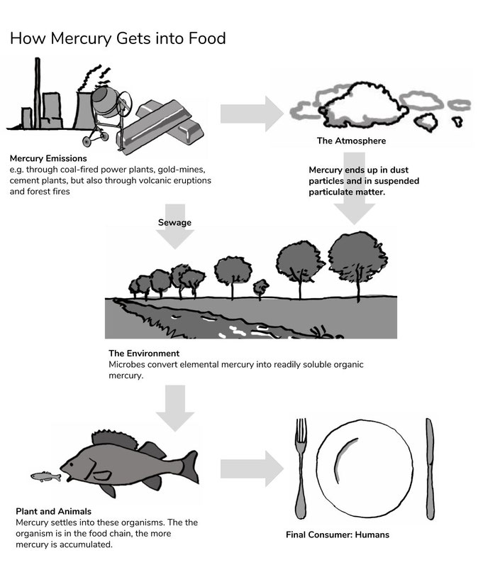 The path of mercury in our environment and food