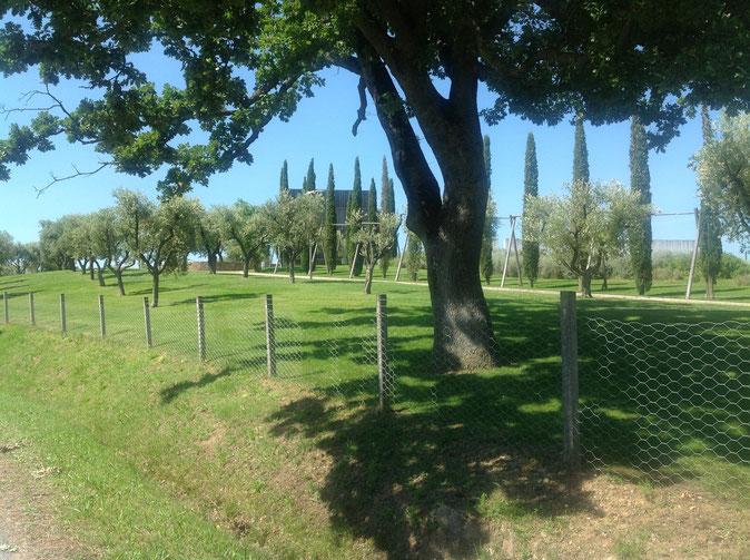 Azienda vitivinicola Collemassari, che produce vino montecucco. Foto blog Etesiaca