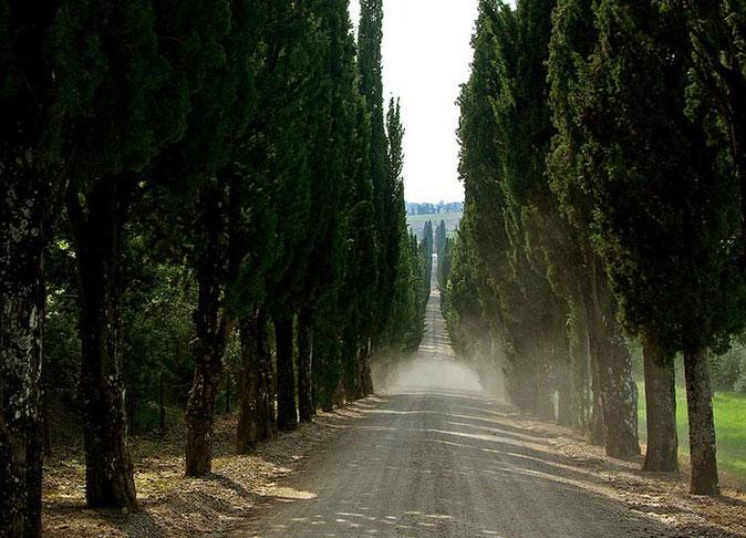Una strada toscana con i cipressi.