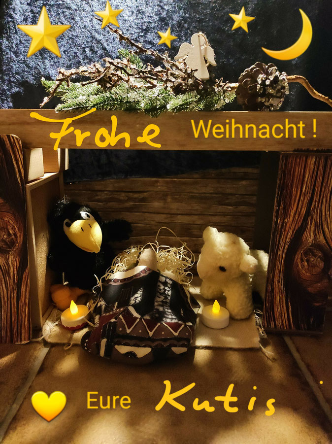 Die Weihnachtskarte der Bocholter KuTis zeigt Frieda, Toni und Panzerotti in der Krippe.