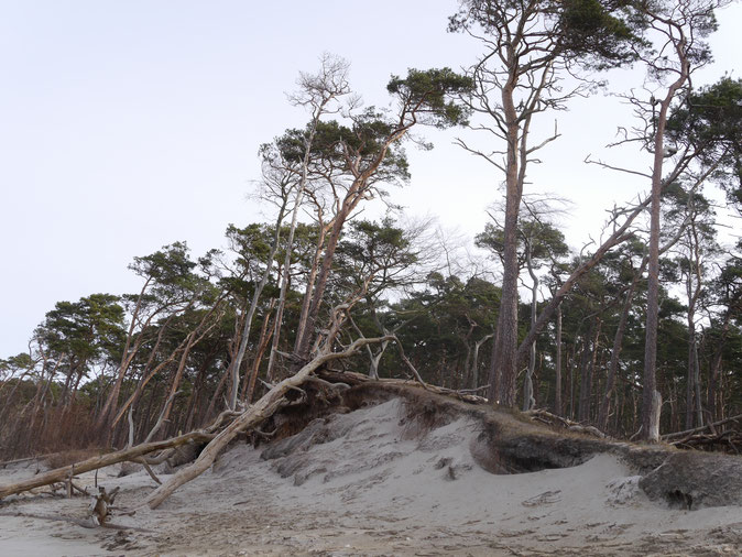 Weststrand - schön und bizarr