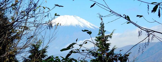 不老山南峰からの富士山
