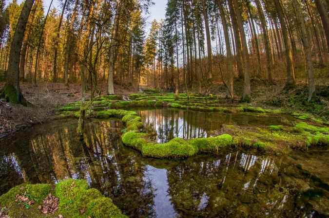 Pure Schönheit: Die Sinterterassen des Kaisinger Brunnenbachs im Kaisinger Tal