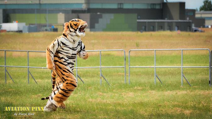 Ein Tiger auf der Jagd ;)