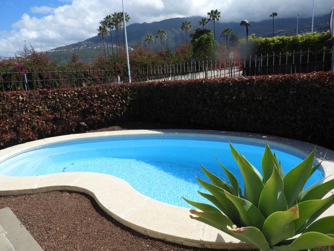 Nierenförmiger Pool in der Ecke vom Garten mit einer Hecke eingefasst.
