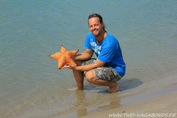 SEA STAR IN XXL