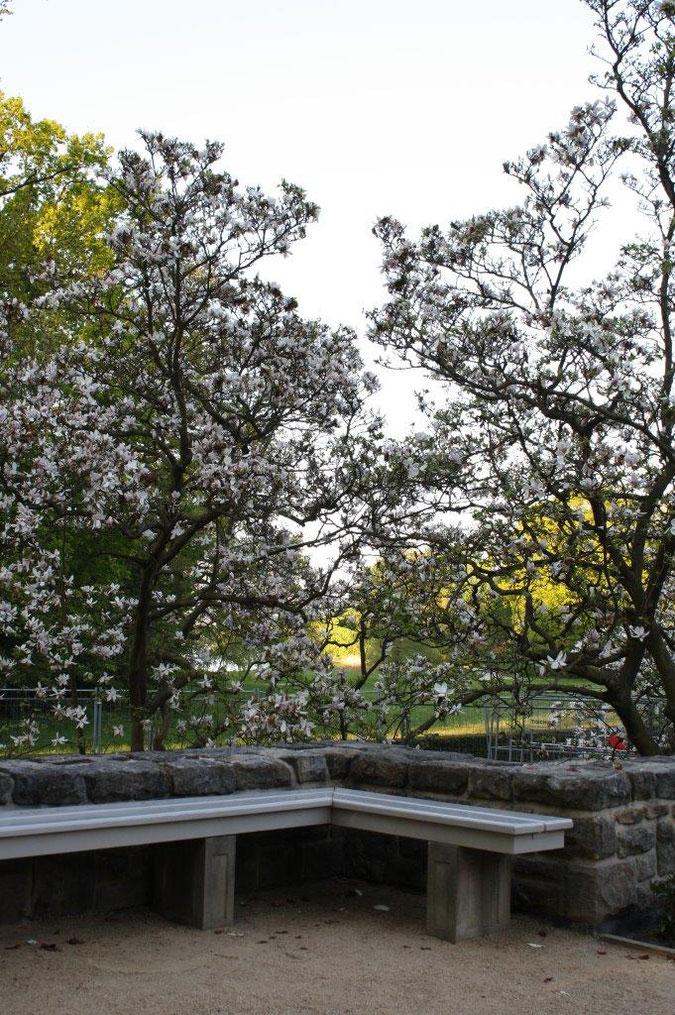 Bank Magnolien Neuer Garten und Schloss Cecilienhof englische Gartenkunst Ausflug Besichtigung Spaziergang Sommer
