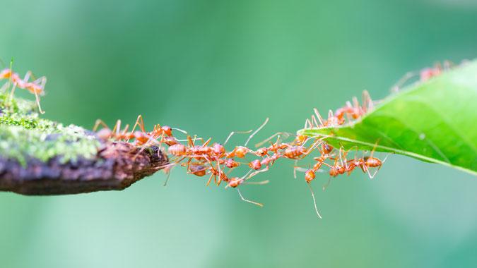 ein ganzheitlicher Blick auf interdisziplinäre Zusammenhänge in der Gesellschaft, im Leben, in der Schöpfung