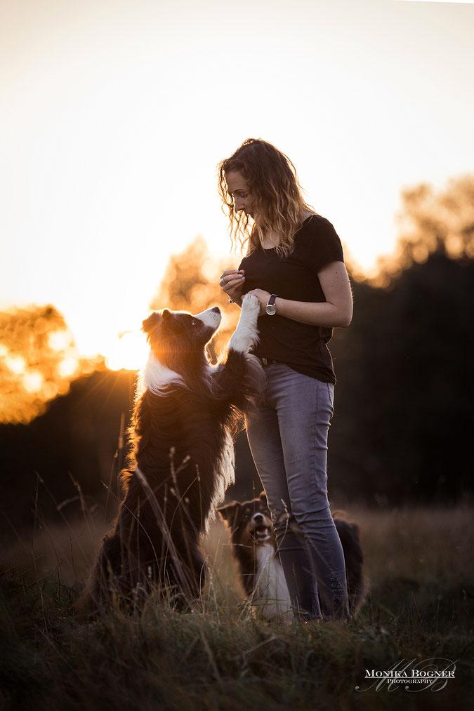 australian shepherd Hundeshooting, Hundefotografie mit Mensch und Hund