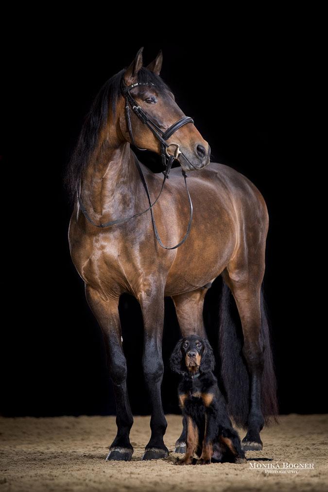 Pferde im Studio, Pferde vor schwarzem Hintergrund, Pferdefotografie, Pferd und Hund