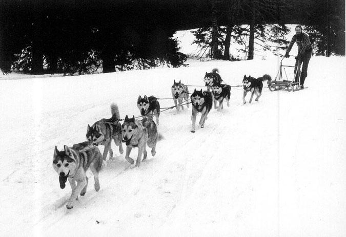 """In diesem Kamtschatka-Gespann 1978 in Le Brassus laufen """"Nicholas"""", sechs seiner Töchter, ein Sohn und """"Belinda"""""""
