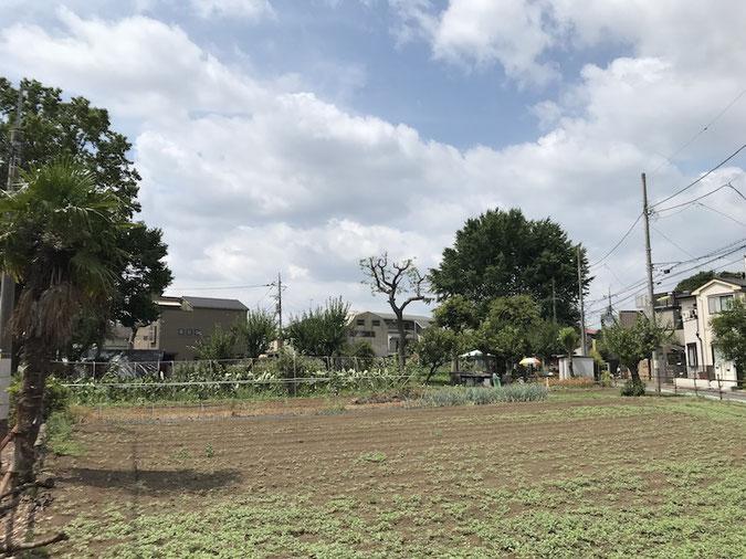 住宅地の中に広がる畑