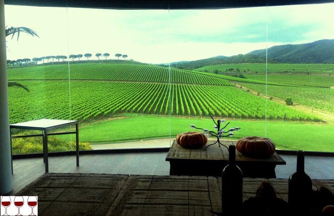 Fattoria le Mortelle, azienda vitivinicola di Antinori in Castiglion Della Pescaia (GR).  Sala di degustazione. Foto blog Etesiaca
