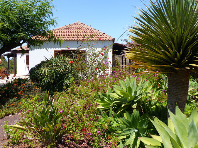 holiday home in the middle of a beautiful tropical garden with palmes and nice places with sun and shadow