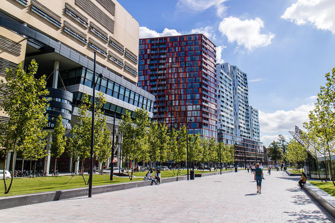 freaky finance, freaky travel, Rotterdam, Reisebericht, invest-abc, Hochhäuser, Bäume, Weg