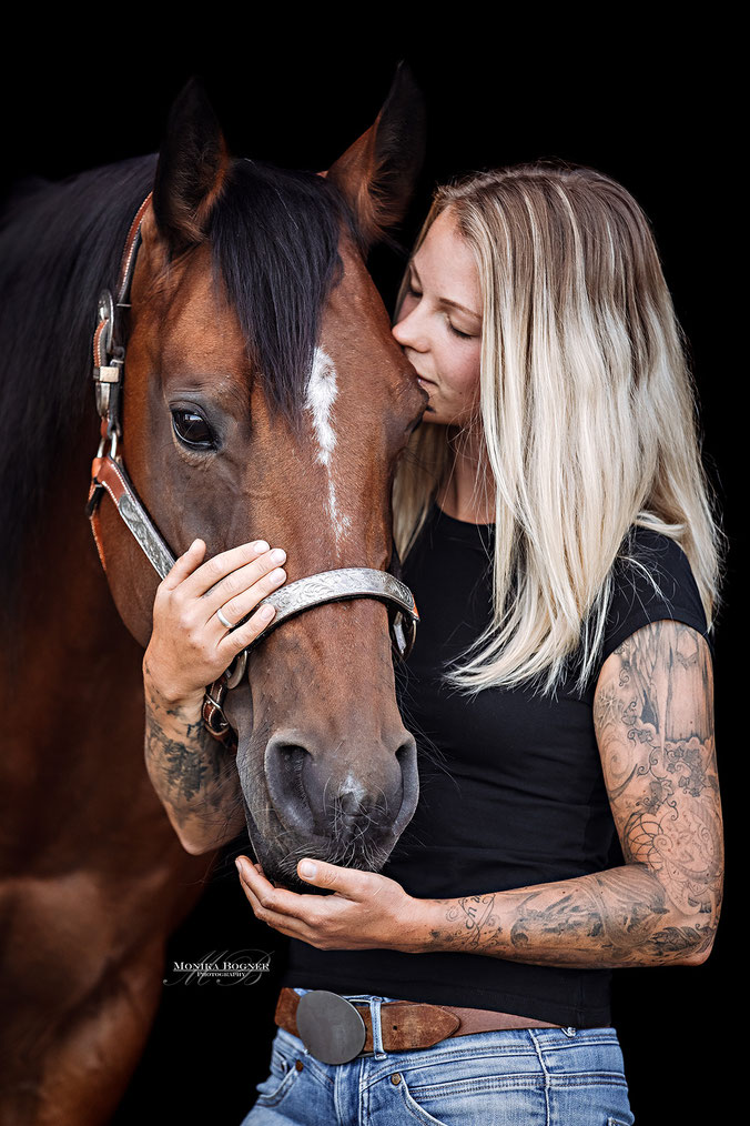 Quarter Horse Stute, Fotos vor schwarzem Hintergrund