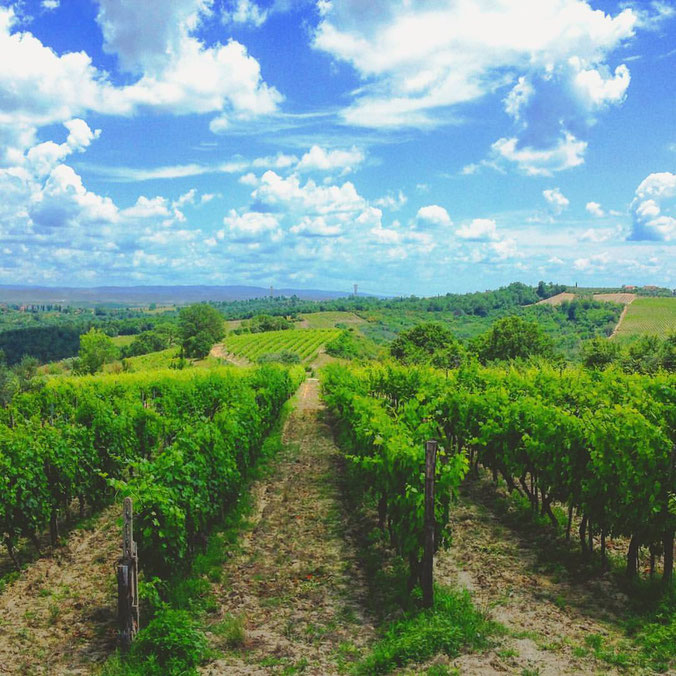 Agricola Tamburini. Chianti, Firenze, Toscana. Etesiaca. Itinerari di vino