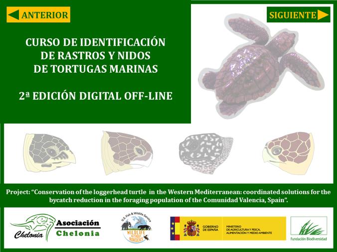 Haga clic en la imagen para descargar el Curso de identificación de rastros y nidos de tortugas marinas en formato PDF