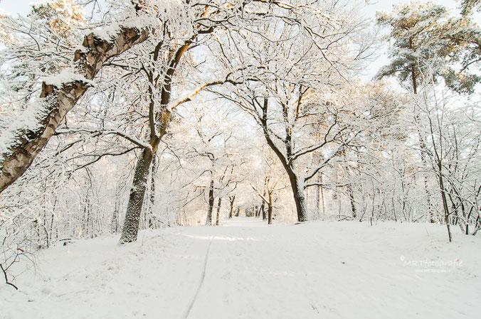 Vers gevallen sneeuw en wat zonlicht in Den Treek, Leusden