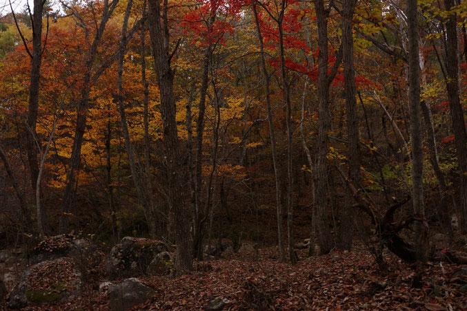 嘆きの岩付近の紅葉