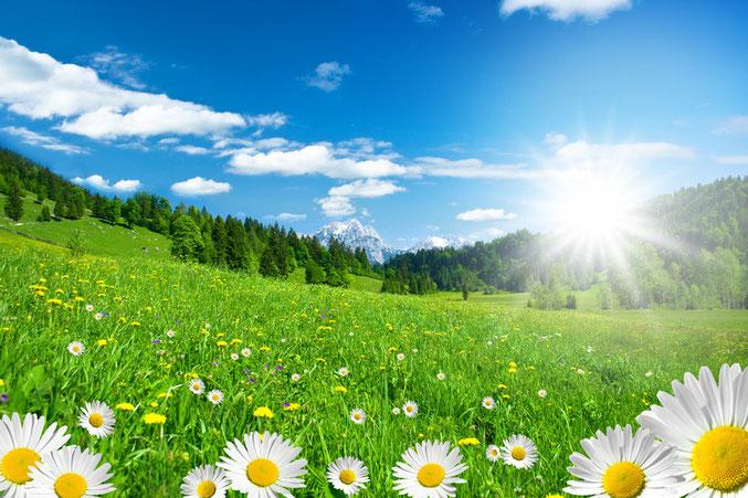 Sommer - blühende Aussichten