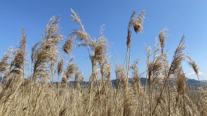 ,starker Wind, Luft, Lüften der Wohnräume, Tipps zum Lüften, Energiefluss, Feng Shui, Lichtblick, Klarheit, Lebensenergie Qi, Feng Shui