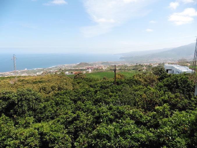 Ausblick auf Puerto de la Cruz und die Nordküste