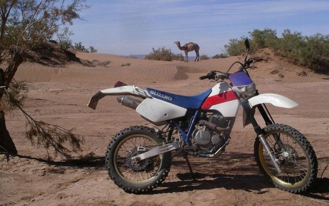 2010 Marokko - M´Hamid