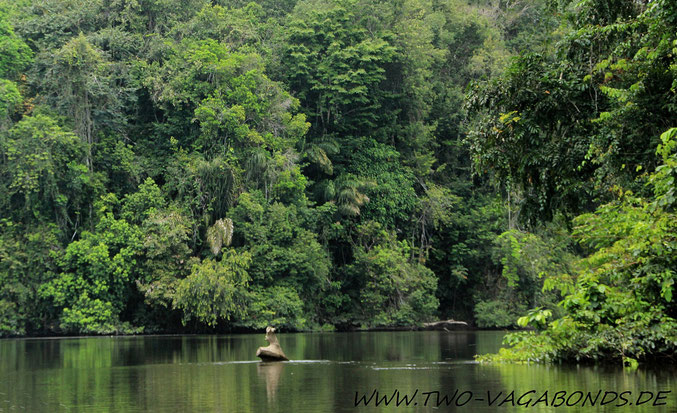 THE AMAZING AMAZONAS