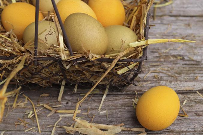 natürlich gefärbte Eier