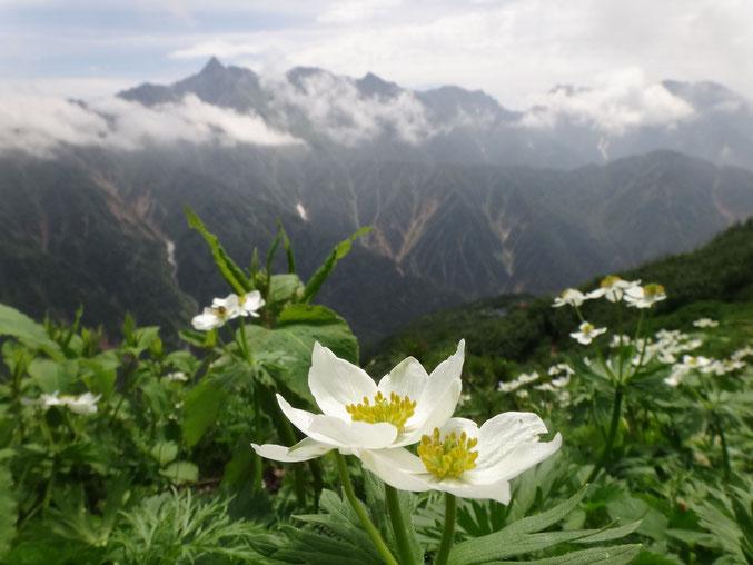 白山一花と穂高の峰々