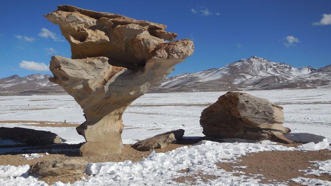 Baum aus Stein in der schneebedeckten Wüste