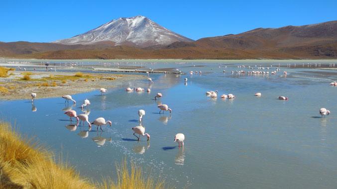 ... und Flamingos aus der Nähe