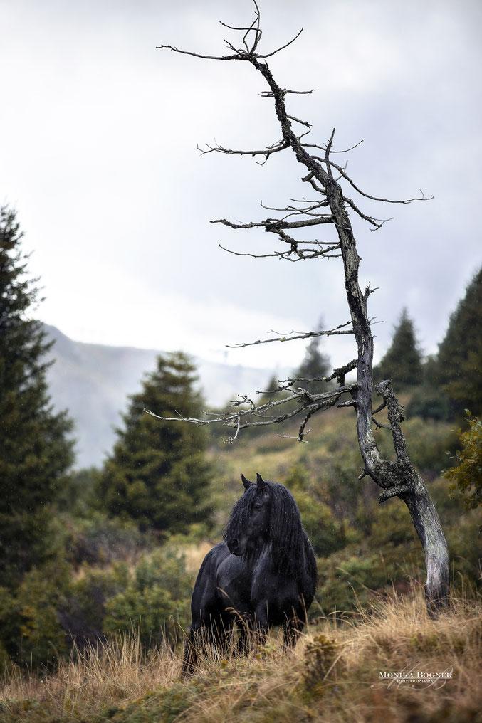 Tinker auf der Alm, Südtirol, Pferdeshooting im Regen