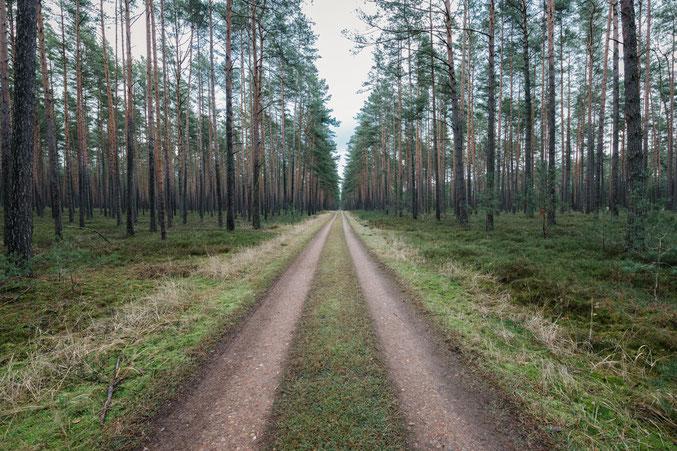 Uckermark, Bäume, Wald, Waldbaden, Holger Nimtz, Fotokunst, forest, fine art, Fotografie, photography,