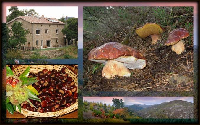 cueillette des chataîgnes ,champignons,amateur de belle photos...