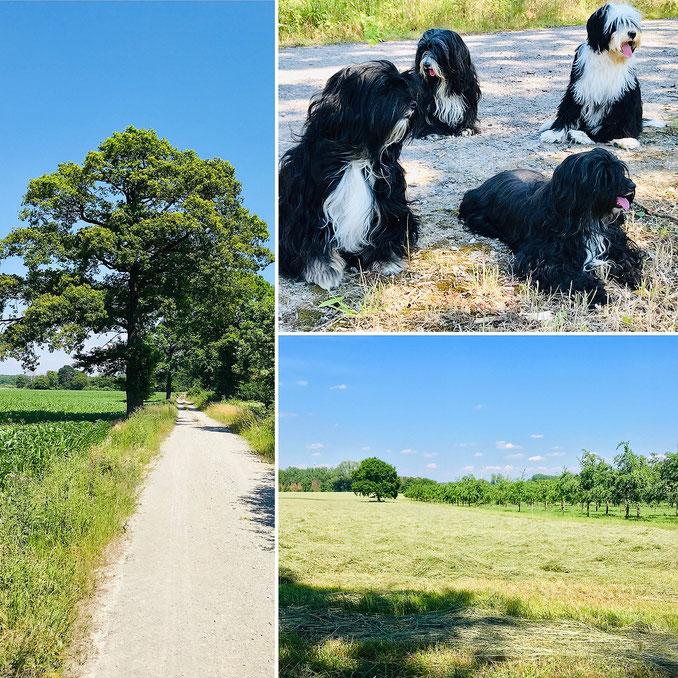 Sommer im Münsterland...