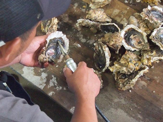 牡蠣をきれいに掃除する作業は一苦労