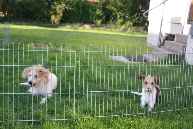 Isa und Genna bewachen das Haus