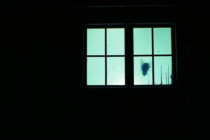Recherches / Installation vidéo de mouches en cabanon, projection sur fenêtre - Libitum, Ad.Lib. - juin 2016, Lubéron