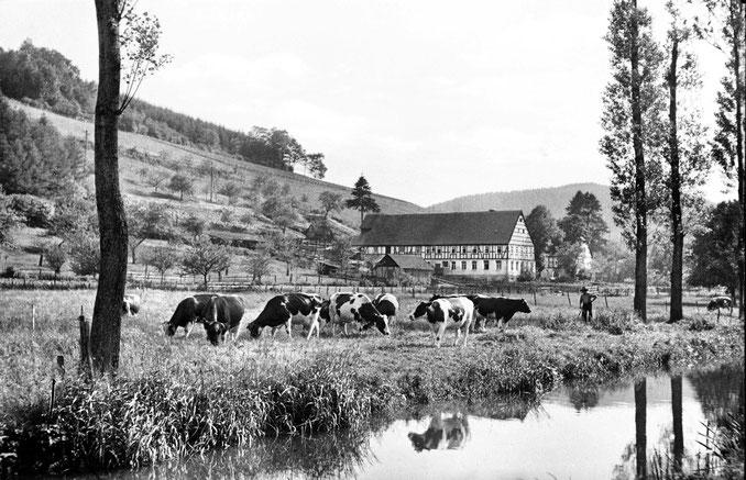 Die Streuobstwiesen am Schultenhof wurden später sämtlich ein Opfer der EG-Rodeprämie