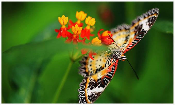 Venez découvrir la ferme aux papillons à Die