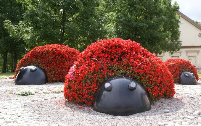 """Gėlių skulptūra """"Trys boružės"""" Ventspilyje / Foto: Artis Gustovskis"""
