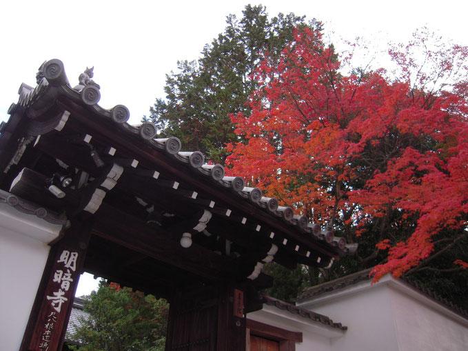 京都 晩秋の明暗寺 H25.11.26