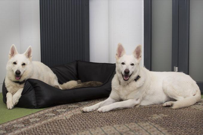 Unsere Bürohunde Amy und Mary