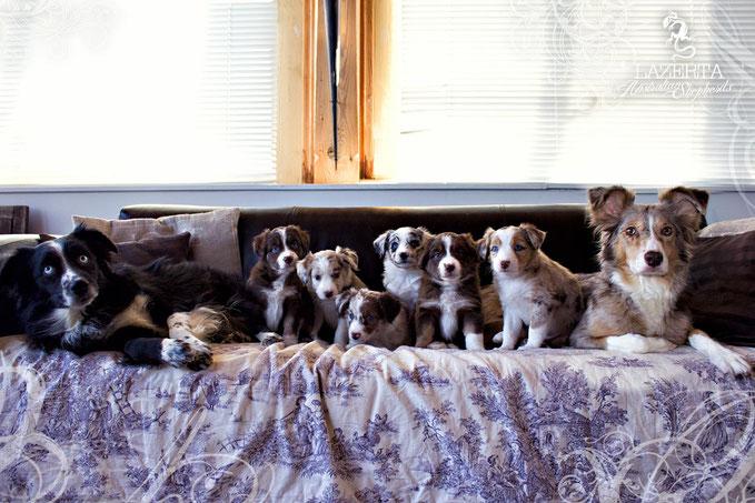 fast 6 Wochen alt - (vlnr.: Papa Eze, Lyric, Sunny, Daizy, Rhapzody, Hazel, Myla, Mama Rose)