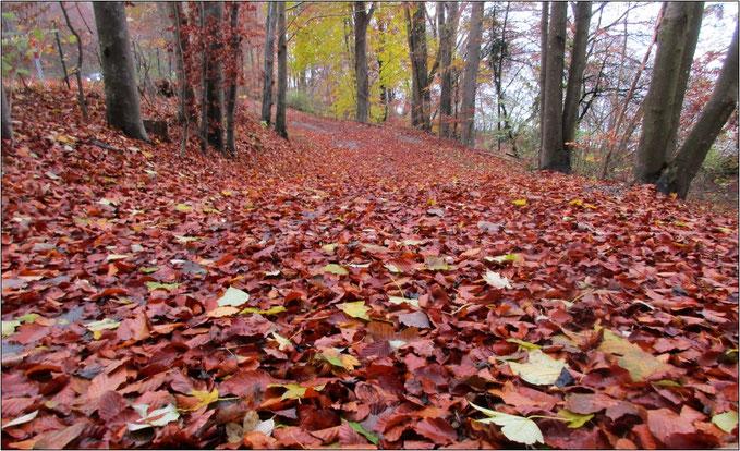 Eher die Regel als die Ausnahme:  Überall Laub auf den Waldwegen.