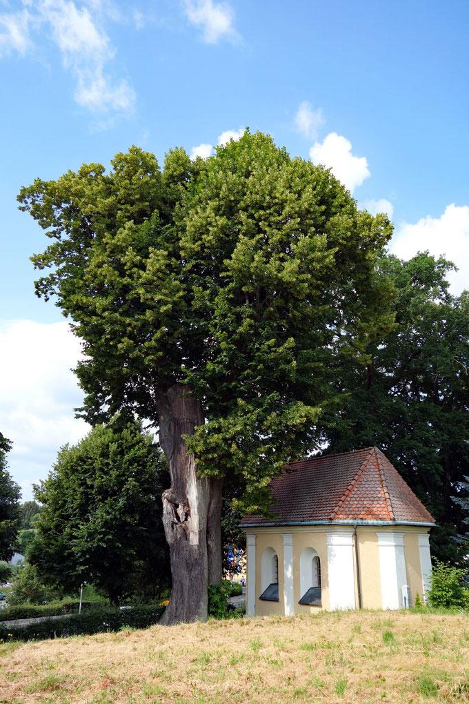 Linde neben der Windischkapelle in Erbendorf