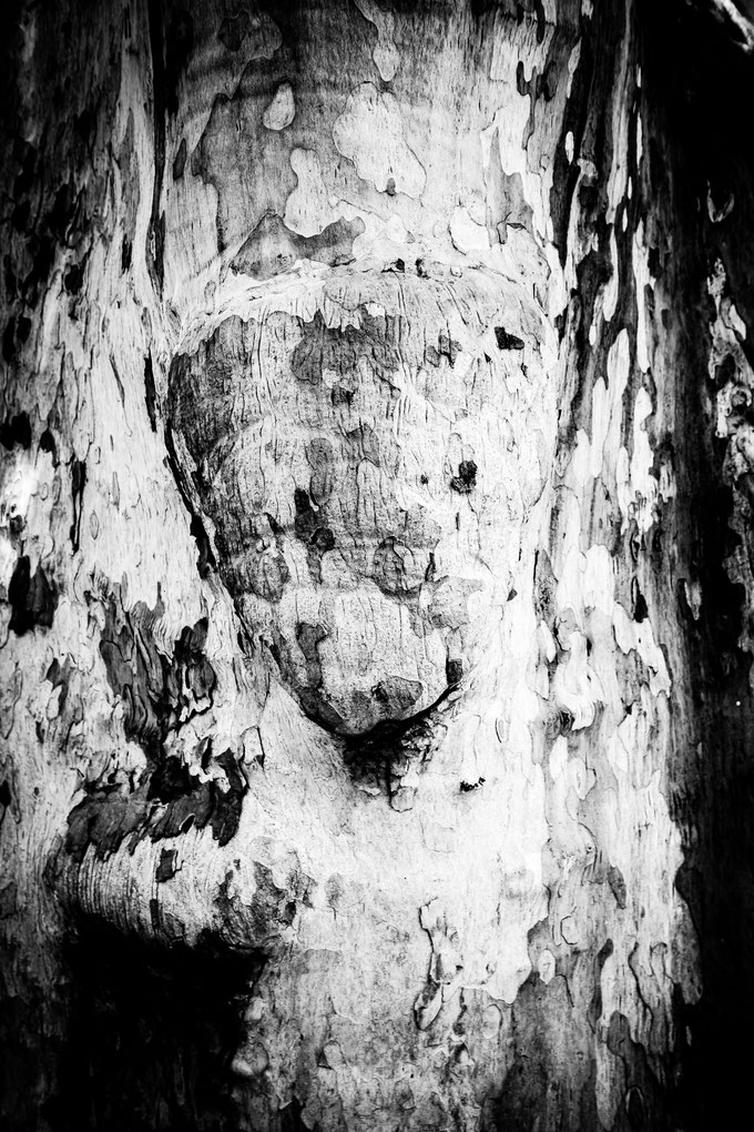 Samira - Foto 8 - animal in the tree crust