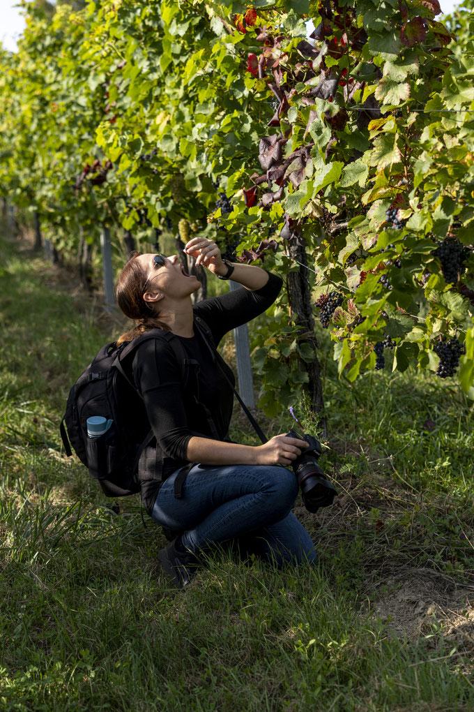 ...nein, nach den besten Weintrauben ;-)